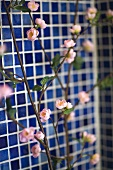 Rose blossom on a branch in front of a tiled wall