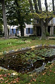 Autumn scene in a garden with lily pads in a pond and an old country home behind the trees