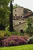 Blühende Blumen und Zypresse im Garten eines Mediterraner Gehöfts