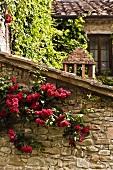 Rote Rosen beranken alte Natursteinmauer eines Anbaus