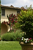 Mediterranean garden and a house with an rose covered arcade