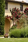 Arkadenfassade einer Villa mit roten Rosen berankt und Rosmarinbusch im Garten