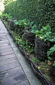 Am Gartenweg mit eingelassenen Holzbohlen stehen Pflanzen in Weidenkörben