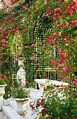 White stone bench and antique planters in front of an arched pergola covered with red roses