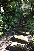 Steinstufen durch wilden Garten am Hang