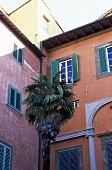 Palms in the corner of a courtyard with red house facades