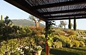 Pergola and professionally designed garden in the Mediterranean countryside