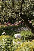 Blooming Mediterranean garden