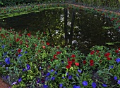 Red and blue flowers around a pond