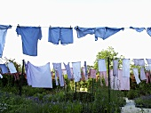 Art in action -- blue laundry on a clothesline in the garden