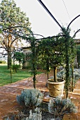 Pergola in a Mediterranean garden