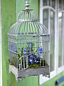 An antique, light grey bird cage decorated with star hyacinths and moss