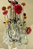 Glass vases of different coloured dahlias hanging from the ceiling