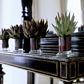 Cacti in glass bowls on an art deco davenport