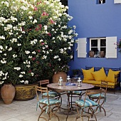 A blooming oleander next to a metal bench with and yellow cushions against a blue house wall