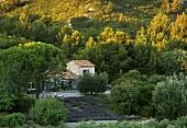 Blick auf Mediterraner Landhaus im Pinienhain in der Abendsonne