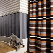 A dog running through a hallway with a striped wall and a striped curtain