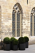 Gothic church windows in a stone facade with box trees in pots in front of it