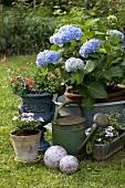 Assorted garden flowers in pots