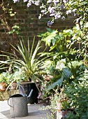A garden detail showing a paved area with pots and containers, steel watering can, plants and flowers,