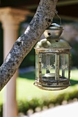Metal lamp with candle hanging from tree branch