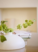 Close up of greenery in pottery vase