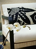 A detail of a white orchid flower with cane chair in the background,