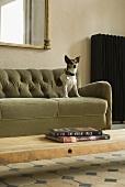 A dog on a green sofa
