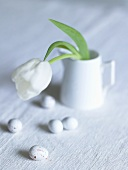 A white tulip in a porcelain cup with eggs next to it