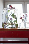 A sprig of rosehips in a glass container filled with water
