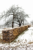 Aufgeschichtetes Brennholz im Winter