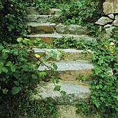 Steintreppe mit Kletterpflanzen bewachsen