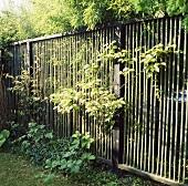 Zaun aus Bambusstäben