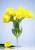 A bunch of yellow tulips in a stemmed glass