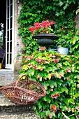 Dunkle Amphore und Zink-Giesskanne zwischen dichtem Weinlaub an Terrassenaufgang eines Landhauses
