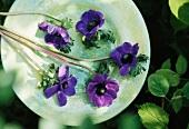Stillleben mit blauen Anemonenstengeln auf hellem Teller