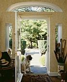 Hund sitzt an der geöffneten Tür des georgischen Hauses mit Blick auf den Garten