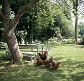 Gartentisch mit Bank unter Baum und Hühnern auf Wiese