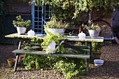 Pflanzen in Metallbehältern auf Tisch vor Mediterraner Haus und geschottertem Hofplatz