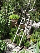 Alte Holzleiter am Baum mit hängender Blumenschale