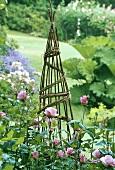 Willow Wigwam - zeltartiges Weidengeflecht und rosa Rosen im ländlichen Garten