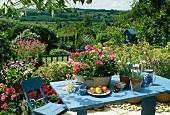 Blühende Pflanzen in Töpfen auf blauem Tisch im ländlichen Garten