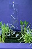 Miniwasserbecken mit Wasserspiel vor violetter Wand