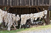 Sheep's fleeces hanging on the line
