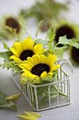 Sonnenblumenblüten & Solidago in Körbchen als Tischdeko