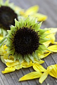 Sunflower seed heads and petals
