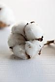 Cotton - ripe cotton bolls