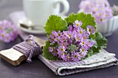 A bunch of baby primroses as table decoration