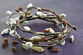 A wreath of willow catkins