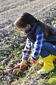 A little girl raking the soil in a field